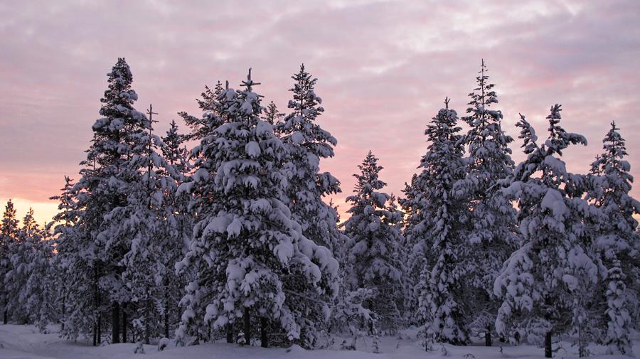 Winterwunderland in den schönsten Pastellfarben