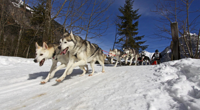 Musher: M. Jauch (SWE)