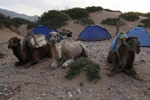 Kamele Camp
