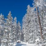 Winterwunderland Sample