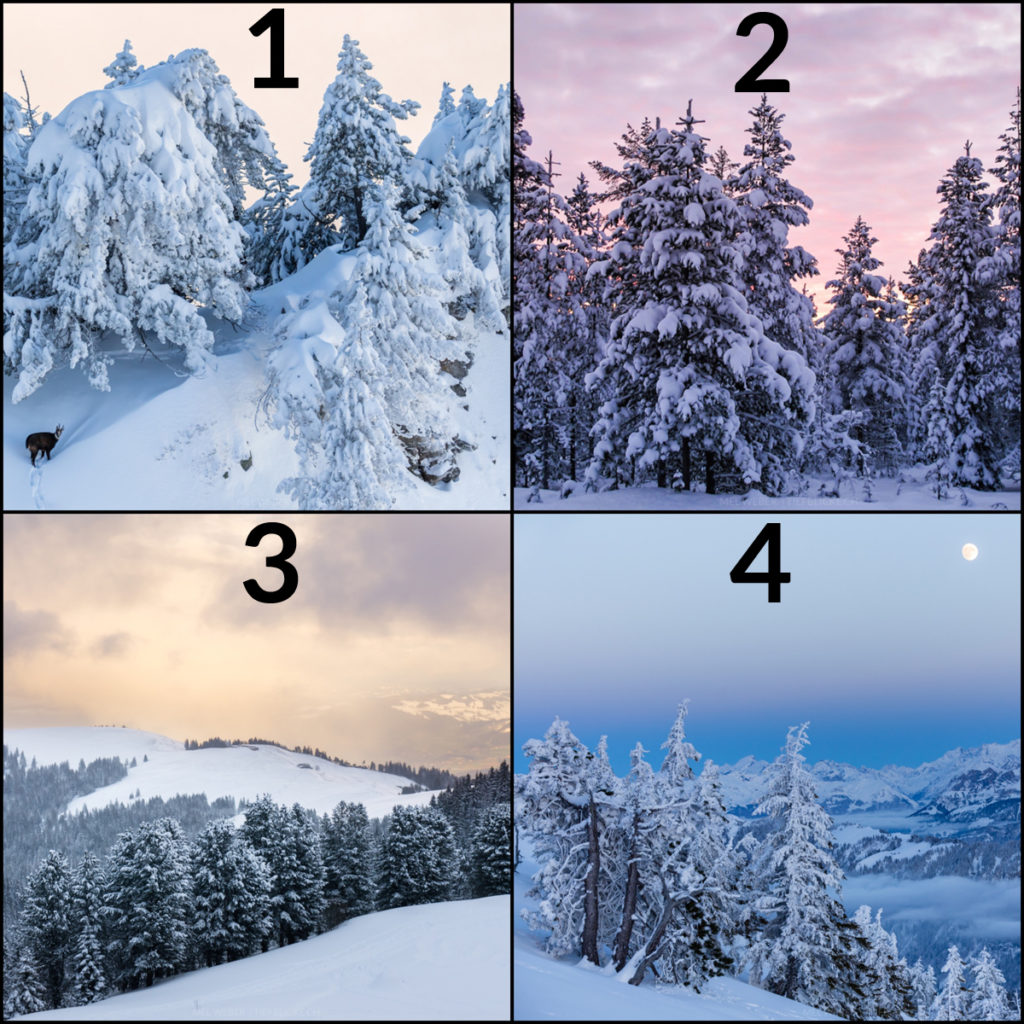 collage_winter_poll
